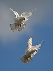 2 Beautiful Doves taking flight